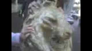 Porno Xxx Zoofilia Piedrofilia Saltillo, Amor De Animales