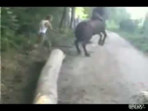 Mos luj qoke me kali
