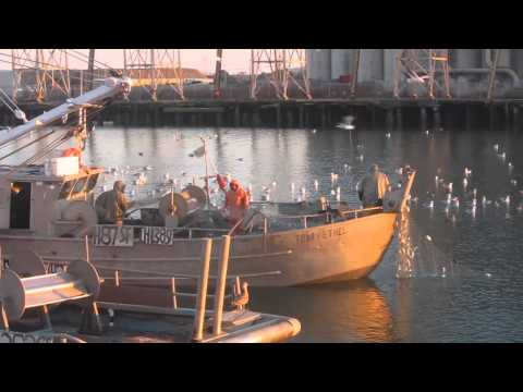 Urban  Commercial Fishing
