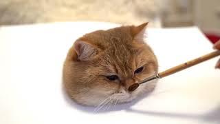 Cómo pintar un gato