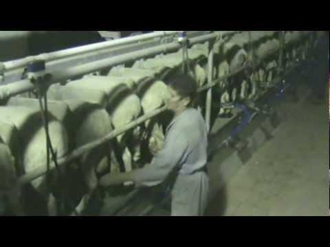 Πρότυπη Κτηνοτροφία στην Ελάτη Κοζάνης