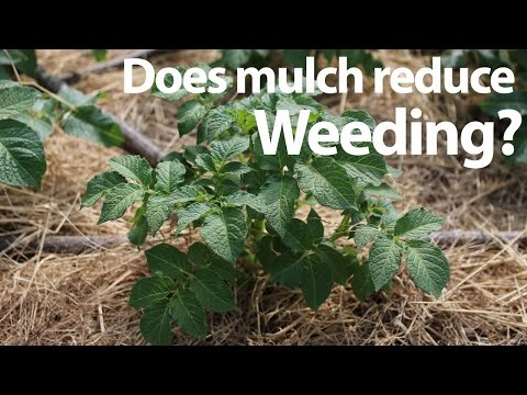 Does Mulch Reduce Weeding in the Garden and Save Time?