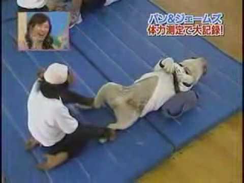 狗狗猩猩冒險:小龐與詹姆士的仰臥起坐