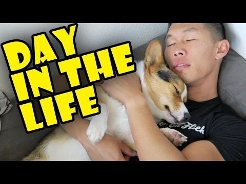 APARTMENT LIFE w/a HAPPY CORGI || Daily Routine - Life After College: Ep. 500