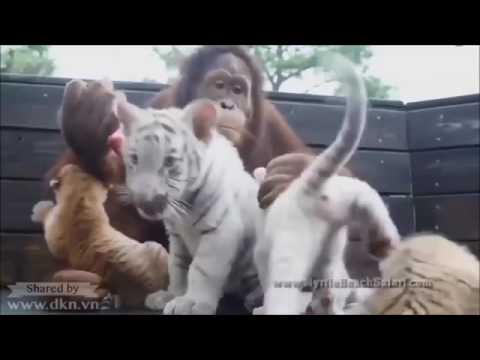 97❃ Khi động vật yêu thương và chăm sóc lẫn nhau Thế giới động vật hoang dã tổng hợp 2016