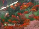 Setting up of an aquarium of ornamental fishes : Method demo