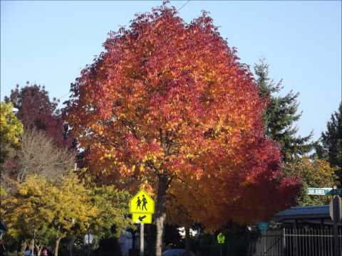 Leaves in Eugene Oregon October 13,2013