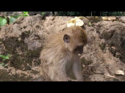 Monkey Temple, Khao Sok National Park, Thailand