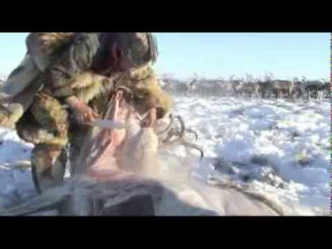 Keepers of the Land. Reindeer Herding, Biodiversity and Knowledge in the Arctic.