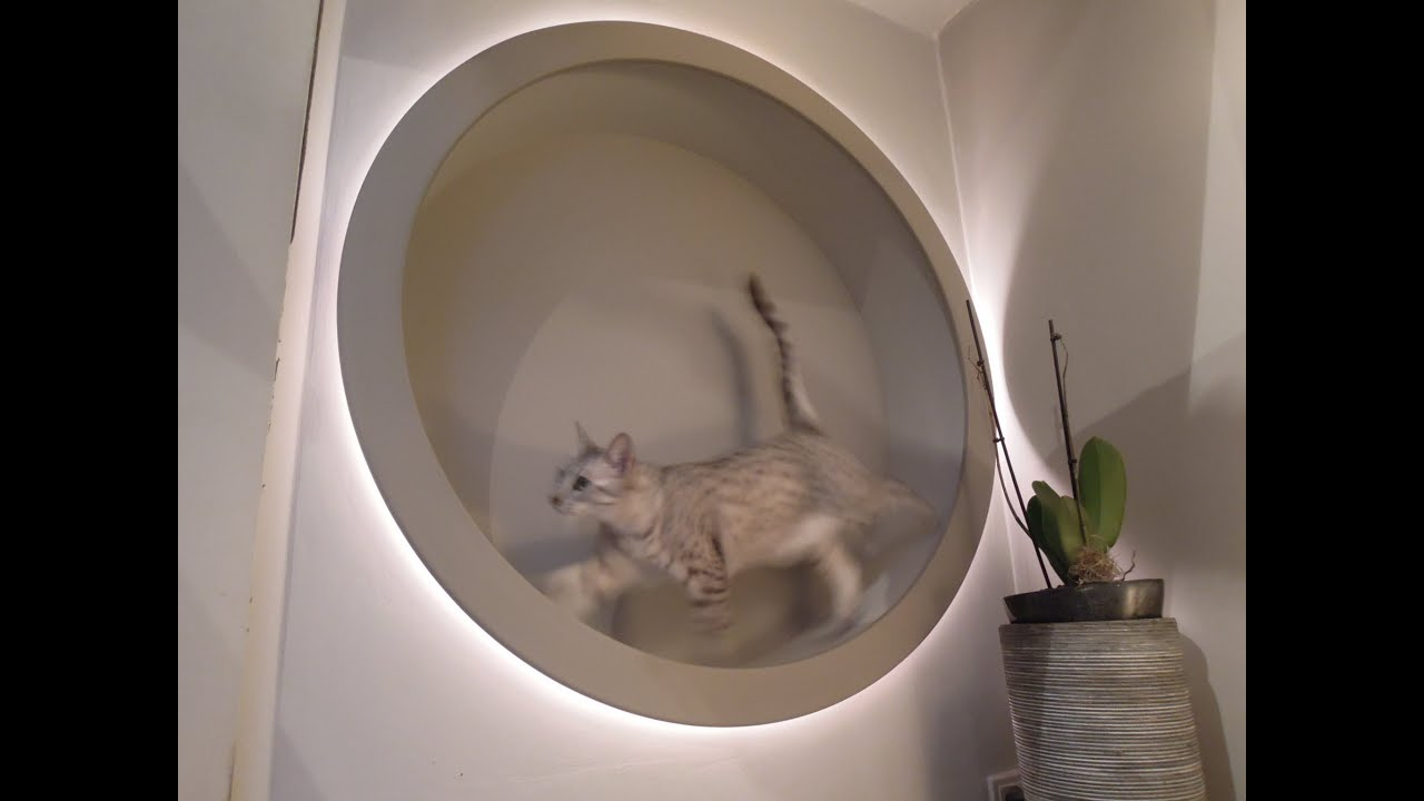 Homemade diy cat wheel and also designlight youtube for How to build a cat tree