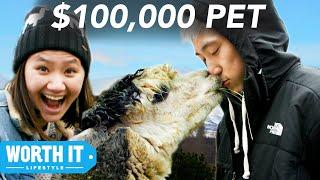 $17 Pet vs. $100,000 Pet