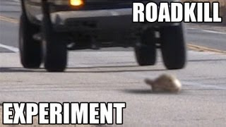 Roadkill Experiment