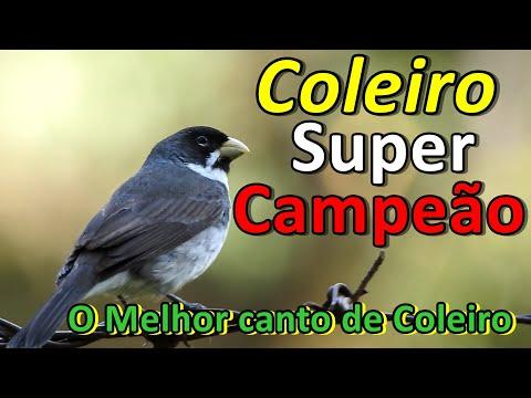 COLEIRO TUI TUI VIVITI  - VÍDEO COM 2 HORAS DE CANTO PURO