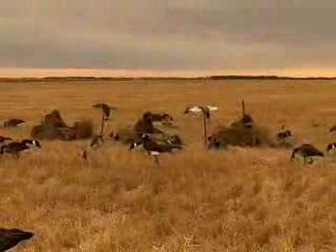 Охота на уток и гусей