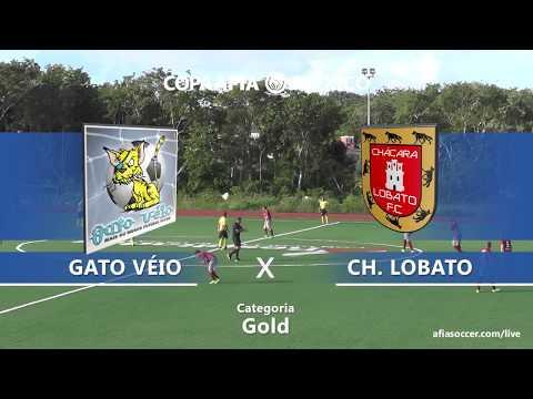 Copa AFIA México 2017 - GATO VEIO X CHACARA LOBATO - GOLD - 14/11/2017