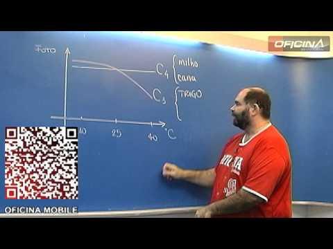 Dica de Biologia - Fotossíntese - C3 e C4