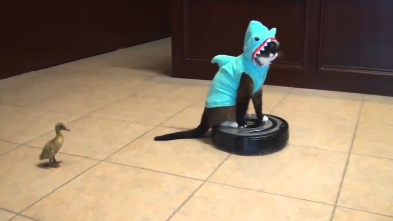 Cat In A Shark Suit On A Roomba Gif