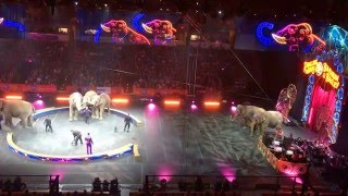 The Last of the Elephants - Ringling Bros. Circus