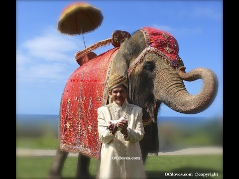Ritz Carlton Indian Elephant White Dove  714 903 6599  Wedding