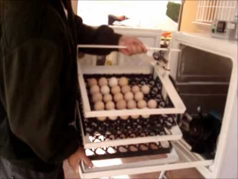 Incubadora de 150 Huevos