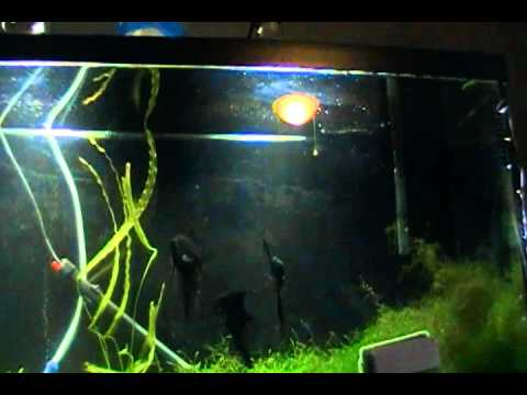 Finished diy double fish tank stand youtube for Double fish tank stand