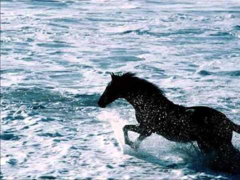 Cavalos Selvagens 2