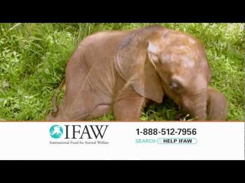 """Elephant"" - IFAW TV Spot"