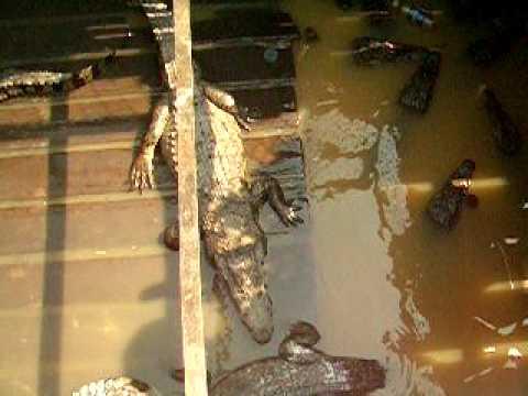 Ca' Sấu trên Biển Hồ và đời sống Việt Kiều Campuchia 2007