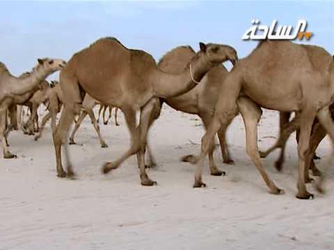 منقية صاحب السمو الأمير فهد بن عبدالله بن محمد بن عبدالرحمن آل سعود (الشعل)