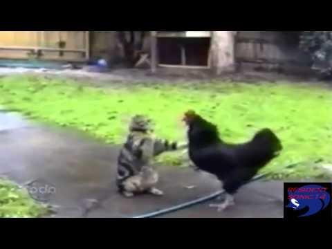 gatos y perros graciosos (loquendo) parte 3