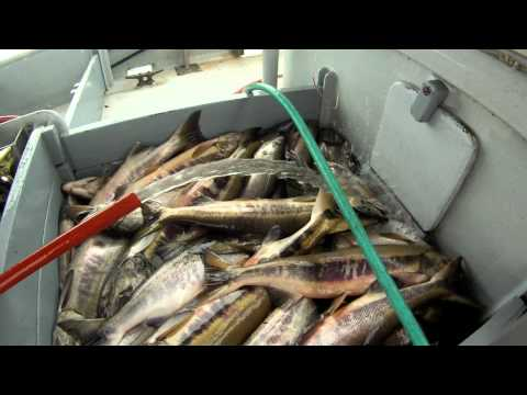 Salmon Fishing 2011