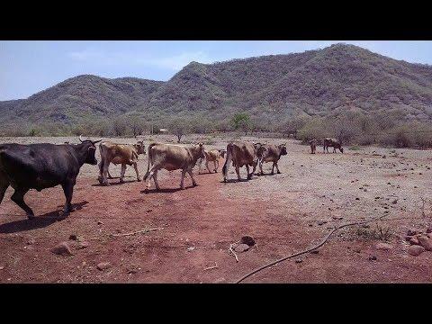 El toro de once_El Reparo Gro.