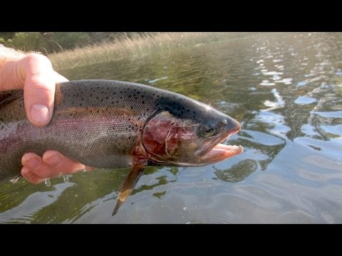 Kayak Fly Fishing BIG Rainbow Trout on Chironomids