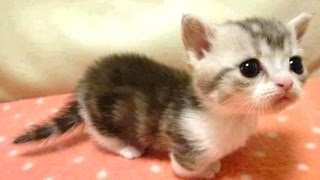 Cute Baby Animals Videos Compilation
