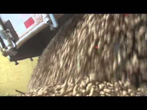 Peanut Plant rolling along