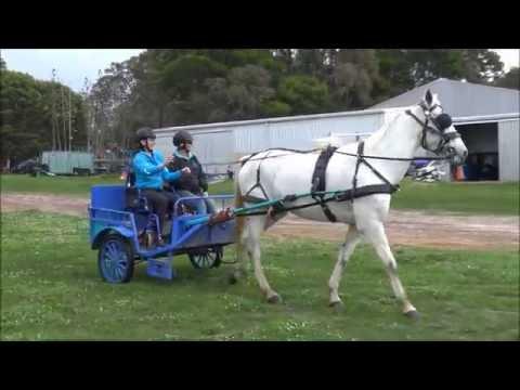 Alycia Burton visits the local RDA and finds Kangaroos!