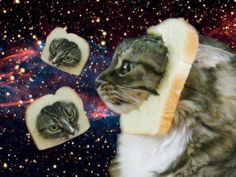 DONT TELL ME CAT - Bread That Cat