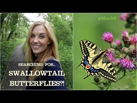 SEARCHING FOR THE UK'S LARGEST BUTTERFLY?! | Maddie Moate