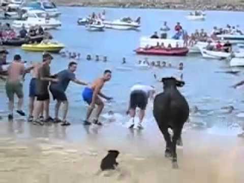 I bikovi vole plažu i more!