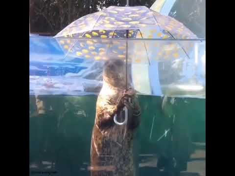 When you hate rain, even if you live in water 😂