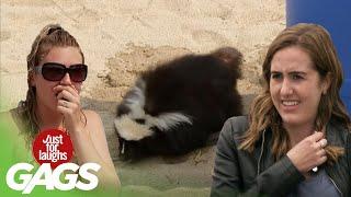 Skrytá kamera - skunk