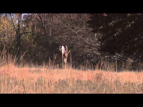 Whitetail Revolution Episode 4 – Original Tecomate Trophy Tip