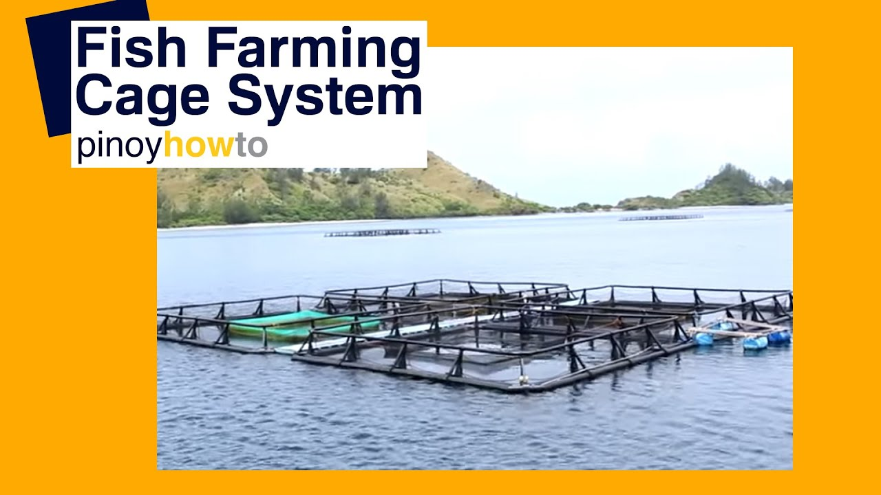 Fish farming cage systems youtube for How to start fish farming