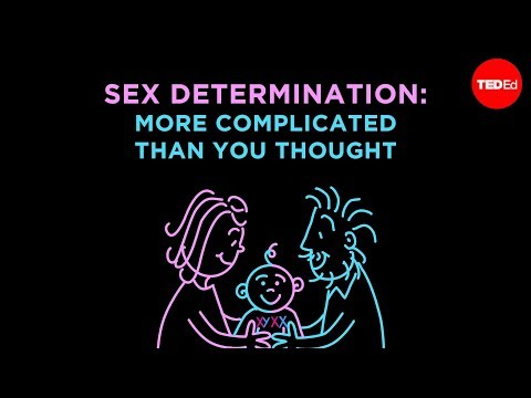 Sex Determination: More Complicated Than You Thought