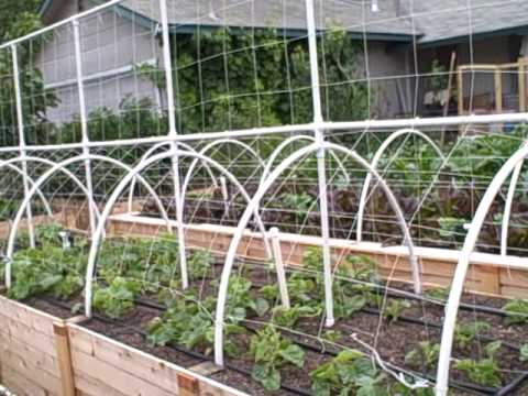 Growing Melons Vertically On A Trellis The Square Foot