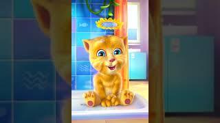 BINGO Dog Song – Ginger Cat sings Baby Song Nursery Rhyme with lyrics
