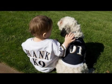 MLB Fans Rally Behind Milwaukee Brewers' Mascot Dog