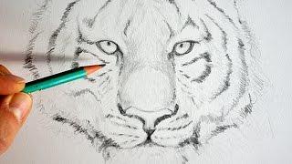 Dessin r aliste stromae portrait videos de dessin peliculas de dessin tvplayvideos - Comment dessiner hello kitty facilement ...