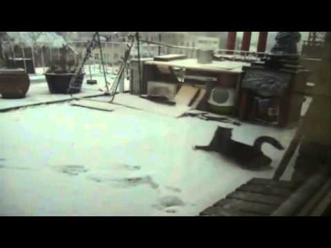 winter starts in Antwerp 03022012.wmv