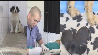 بالفيديو.. هذا هو مصير كلاب مربية الحيوانات الألمانية ماريلينز بعد وفاتها |